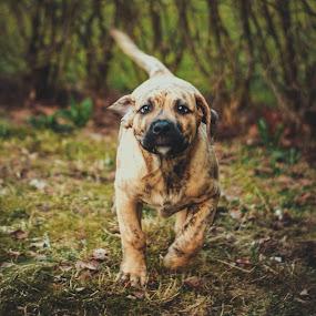 by Kjell Kasin - Animals - Dogs Running