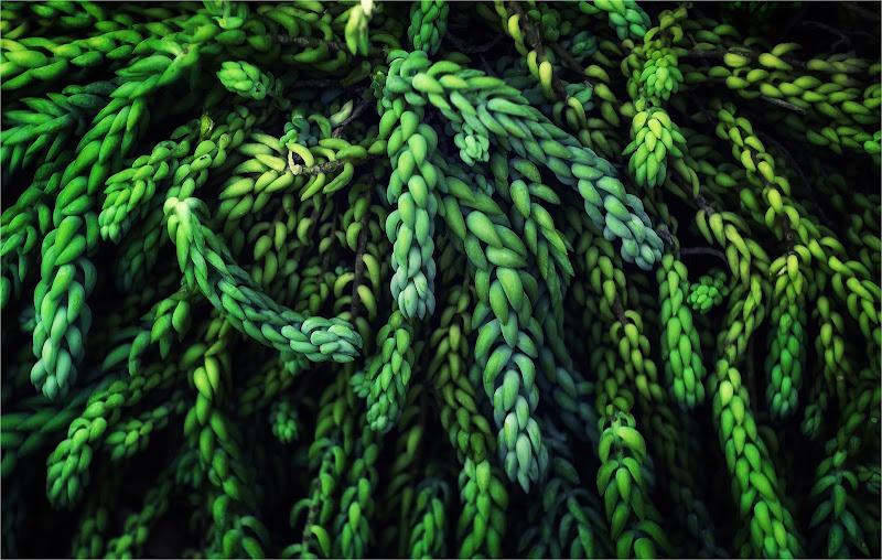 green dreads di Giovi18