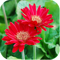 Nature Flowers Wallpapers icon