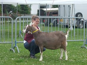 Photo: Klasse 5: 2 jarige toggenburger geiten.  Renske's Frederika 'JH'