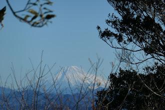 枝越しに富士山