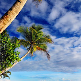coconut tree by Mahdy Muchammad - Landscapes Beaches