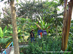 Photo: Tropical plantations around waste recycle plant.