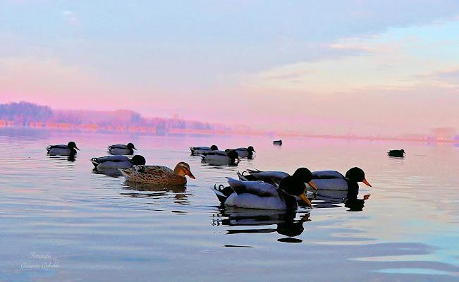 Sul Lago di Griby59
