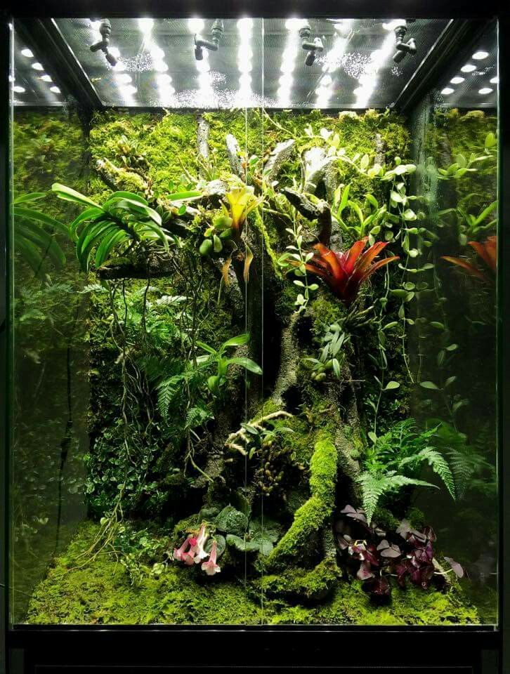 Completed arboreal bioactive terrarium with plants