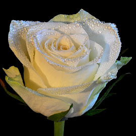 by Eugenija Seinauskiene - Flowers Single Flower (  )