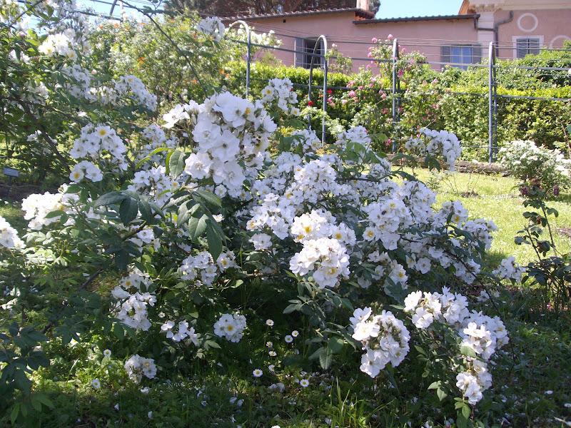 Esplosione di fiori di Francesca89