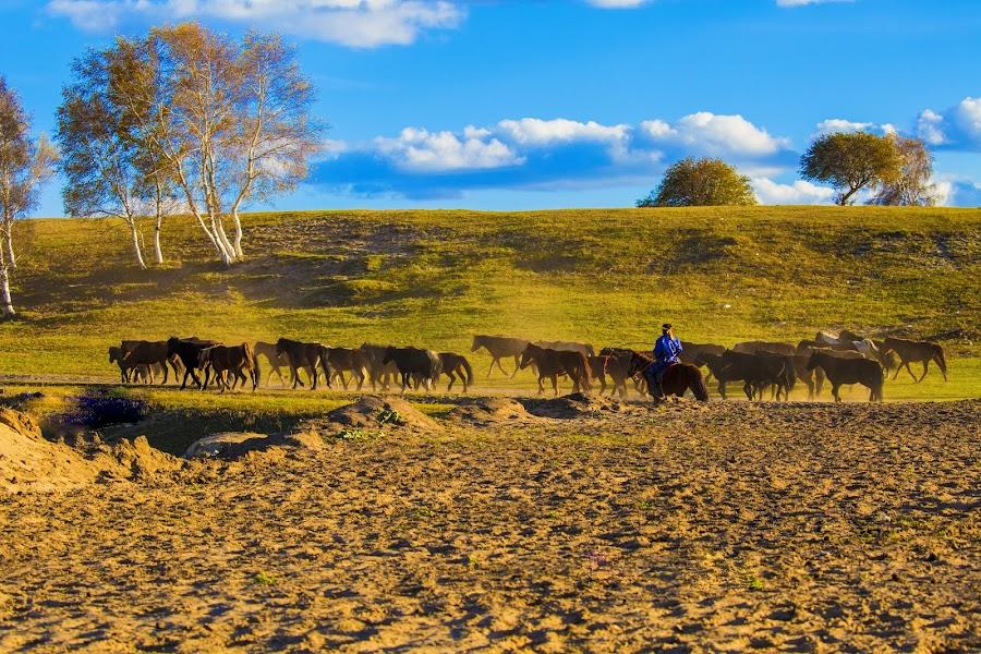 by 曾 程泓 - Animals Horses