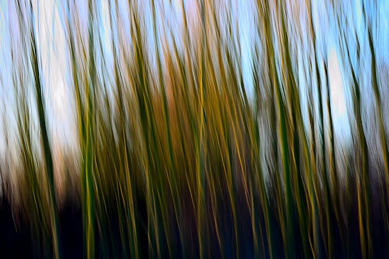 Il bosco di gigibe