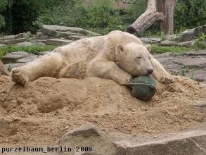 Photo: Knut hat den zweiten Jutesack entdeckt ;-)
