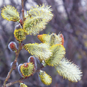 come the spring by Vladimir Krizan - Nature Up Close Other plants