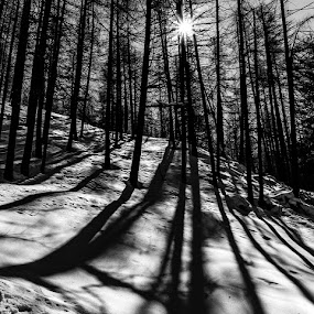 Shadows... by Katherine Rynor - Black & White Landscapes ( snow, trees, shadows, sun )