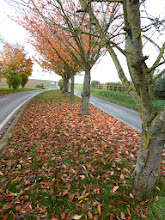 Photo: L'automne est bien là avec ses belles couleurs