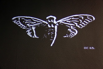 Photo: Cicada 0C E5.