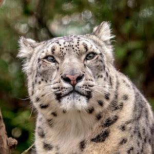11 central park zoo (624A5339) March 4, 2018.jpg
