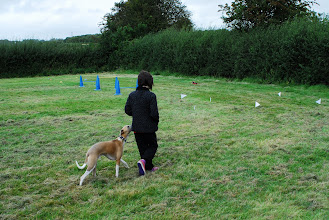 Photo: Henry Whippet and Lily about to start the Obstacle Course
