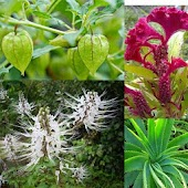 Medicinal Plants And Benefits