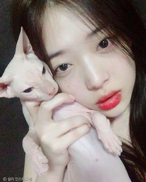 heechul--sulli-cat4