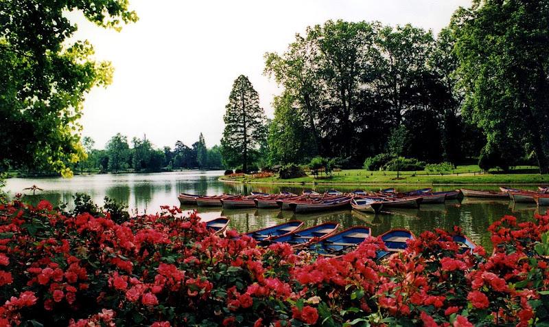 Lake of roses di Francesca Malavasi