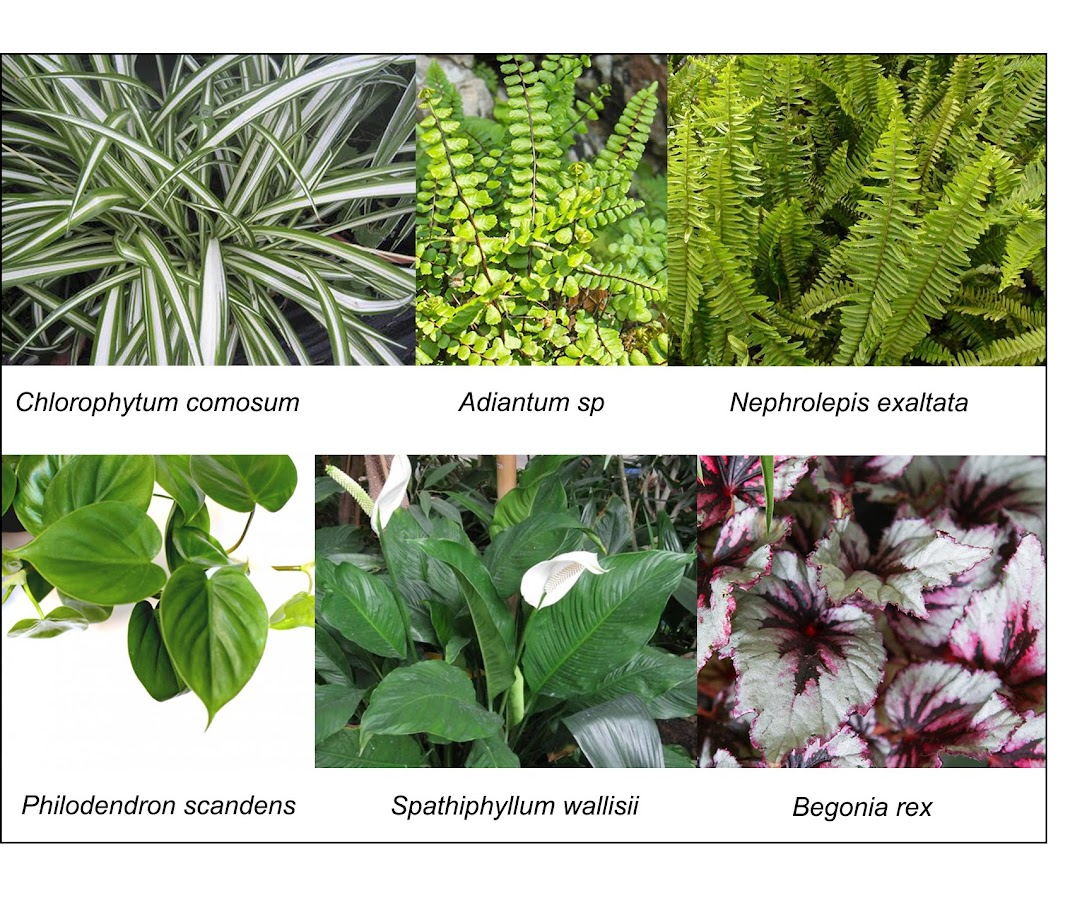 especies utilizadas en el jardín de weleda