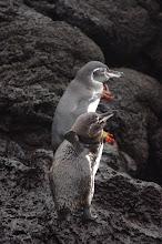 Photo: Itchy Penguin