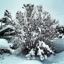 Photo: Mucha #nieve hoy, tendremos una blanca #Navidad. #Invierno