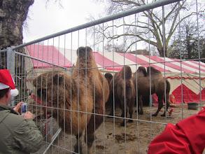 Photo: waar kamelen ons komen begroeten