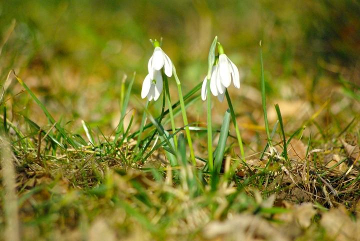 Primavera... di sergio71