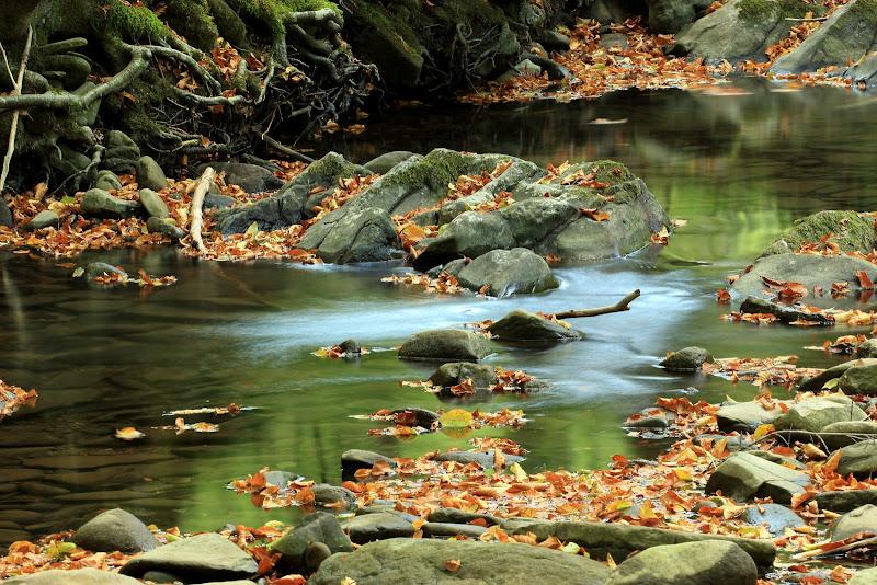 Seta d'autunno  di Rigofoto