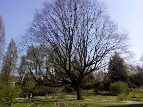 Photo: F4233852 w Ogrodzie Botanicznym
