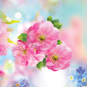 Spring Flower Live Wallpaper icon