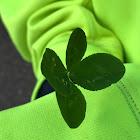 Four-leaf white clover