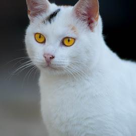 by Ivana Pavičić - Animals - Cats Portraits