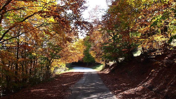 Foliage a Castelluccio di Thomasina
