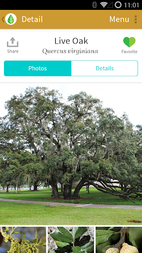 Trees: North Central Florida