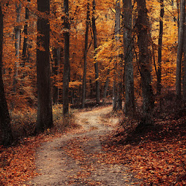 Autumn Walk LXXXIX. by Zsolt Zsigmond - Landscapes Forests ( path, forest, fall, nature, woods, autumn, trees, landscape )