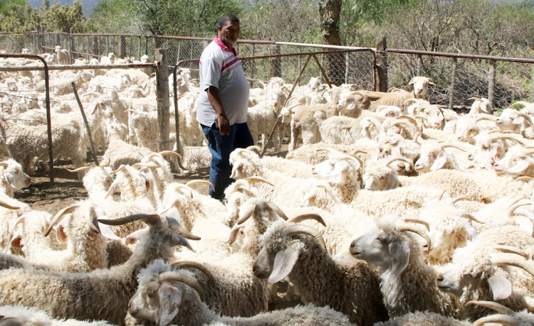TOUGH TIMES: Leon Barends, from Irene Farm, with his angora goats
