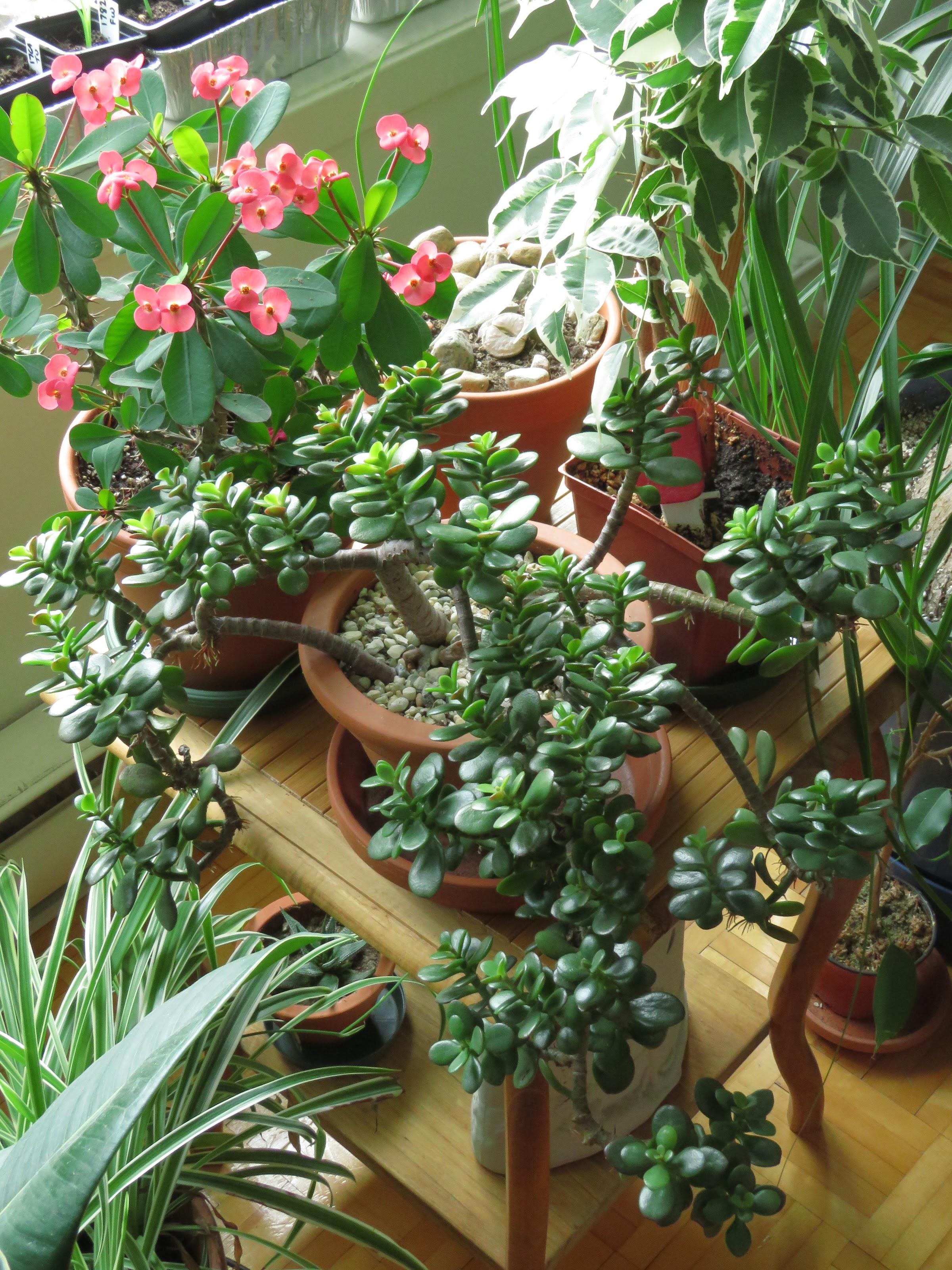 Mes petites plantes grasses et cactées - Page 4 JCUjRcdOfQJ2Gw5nlgyC0H4IruduFfP77Wk3L6LhBuqP0nm5VUPpLsEWrTd84PqTsn3WDE2qzCbcOKaHFscs0Vif7J-lqQOuUpwF3O6P6_V0vxy2aIR-093iba9Zpl2v-NuGeSSsepE=w2400