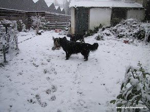 Photo: Voor Fee is dit haar allereerste sneeuw
