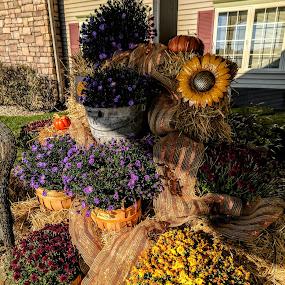 Autumn  by Toni Haas - Flowers Flower Arangements ( mums flowers autumn,  )