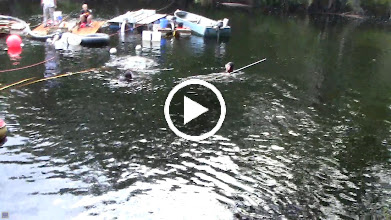 Video: With the heavy rains it is like diving in a glass of tea - tannin really colors the water.