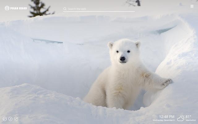 Polar Bears - Sea Bear HD Wallpapers