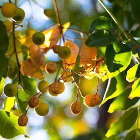 by Maya Bar - Nature Up Close Trees & Bushes (  )