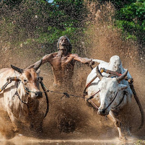 the cow by Taufik T KamaMoto - News & Events Sports