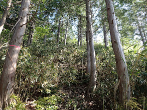 ここから笹薮に(山頂まで120m)