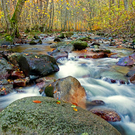 I'll take you there by Siniša Almaši - Nature Up Close Water ( water, up close, natural light, stream, forest, landscape, woods, photography, depth, dslr, colours, nature, autumn, cascade, trees, view, stones, rocks, light, river )