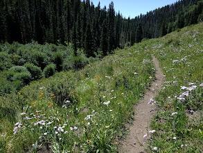 Photo: Trail through a flower-strewn meadow