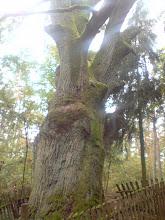 Photo: Pomnik przyrody nr 3