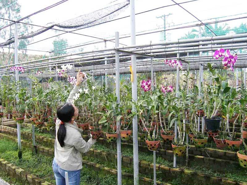 Kết quả hình ảnh cho lưới che nắng trồng lan