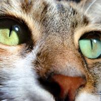 Occhio felino di